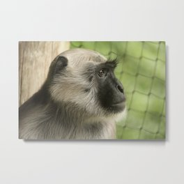 Monkey On The Lookout Metal Print