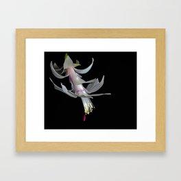 White Christmas Cactus Framed Art Print