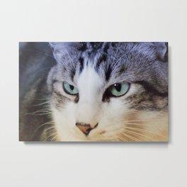Il mio gatto Metal Print