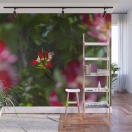 Red Tea Rose Wall Mural