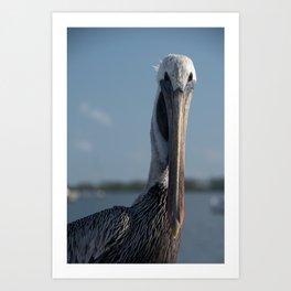 Bob The Pelican Color Animal / Coastal Bird Wildlife Photograph Art Print