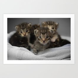 Photo of a group of cuddly kittens Art Print