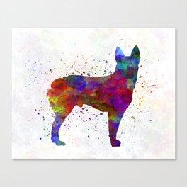 Australian Stumpy Tail Cattle Dog in watercolor Canvas Print