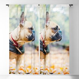 Cute puppy by Neil Cooper Blackout Curtain