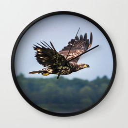 Immature Bald Eagle Wall Clock