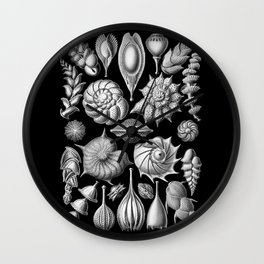 Sea Shells (Thalamophora) by Ernst Haeckel Wall Clock