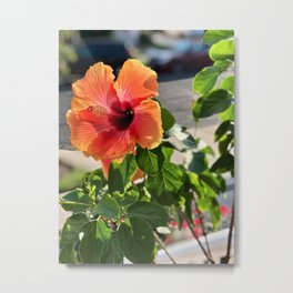 Multi Colored Hibiscus Metal Print