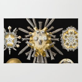 Ernst Haeckel Echinidea Sea Urchin Rug