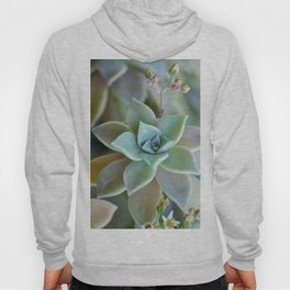 Desert bloom Hoody