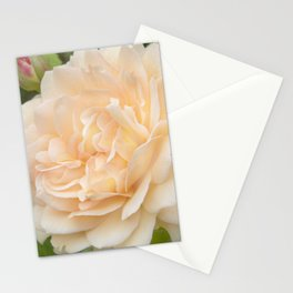 Delicate Petals Stationery Cards