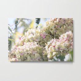 The Beauty of Summer Metal Print