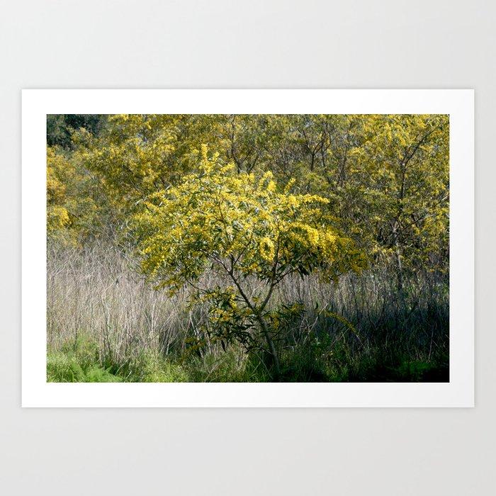 Flowering acacia tree art print by annaki society6 flowering acacia tree art print mightylinksfo