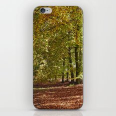 Autumnal beech trees in a natural woodland. Norfolk, UK. iPhone Skin