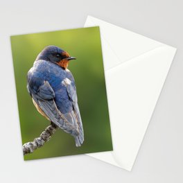 Profile of a Barn Swallow Stationery Cards