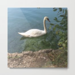 Elegance and Grace Metal Print