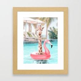 Giraffe in a swimming pool Framed Art Print