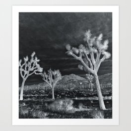 Joshua Tree InfraRed by CREYES Art Print