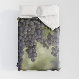black grape grows on vineyard Comforters