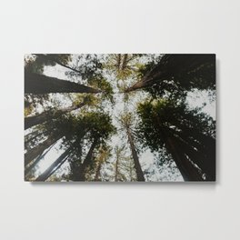 Muir Woods, California Metal Print