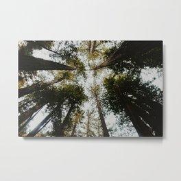 Muir Woods, California Metal Print
