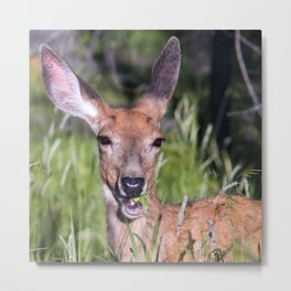 Deer With Regal Ears & Shimmering Nose Munching Grass Metal Print