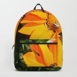 Bright Orange Gazania Flower with Snail Backpack