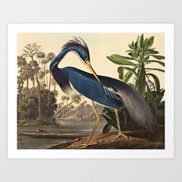 John James Audubon - Louisiana Heron Art Print