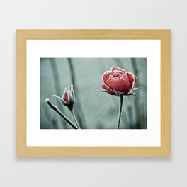 frosted rose and bud in the cold winter Framed Art Print