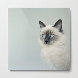 Sweet cat Metal Print