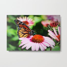 Butterfly from New Zealand Metal Print