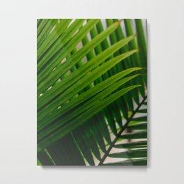 Tropical Lines Metal Print