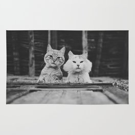 Two adorable cats looking down Rug
