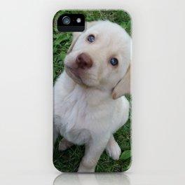 Cutie Pie yellow Lab puppy iPhone Case