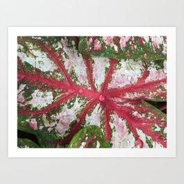 Heart of the Leaf Art Print