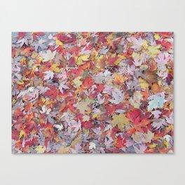 sugar maple sprinkles Canvas Print