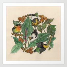 Manacus Art Print