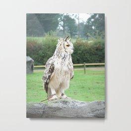 Feathered Friend Metal Print