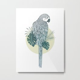 Pappagallo Metal Print