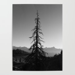 Black Tree in the Mountains Poster