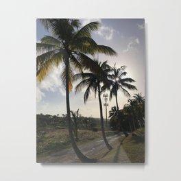 Barbados Palm Tree Row Road Metal Print