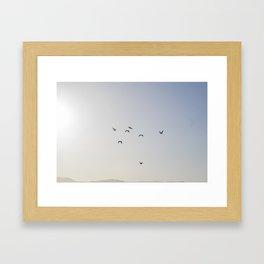 Pelicans flying Framed Art Print