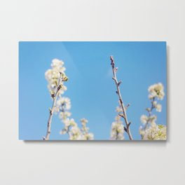 Blue Blossoms Metal Print