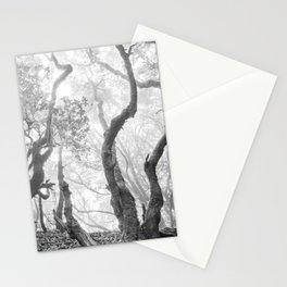 Cedro Forest. Dream Woods. Bw Stationery Cards