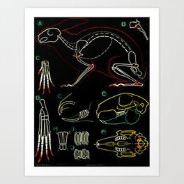 Paul Sougy: The Rabbit, 1950s (proceeds benefit The Nature Conservancy) Art Print