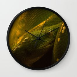 the green tree python waiting for a adventure Wall Clock