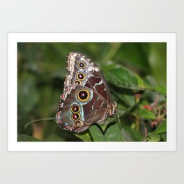 Spotted Butterfly Art Print