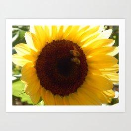 Sunflower bee buddies Art Print