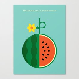 Fruit: Watermelon Canvas Print