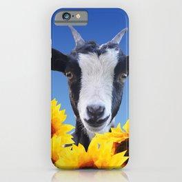 Goat in Sunflower field iPhone Case