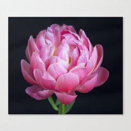 Romantic Pink Peony Canvas Print